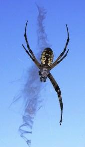 Spider Math (8 - 2) = 6