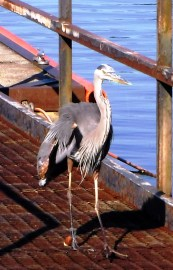 Heron Featured Image 1